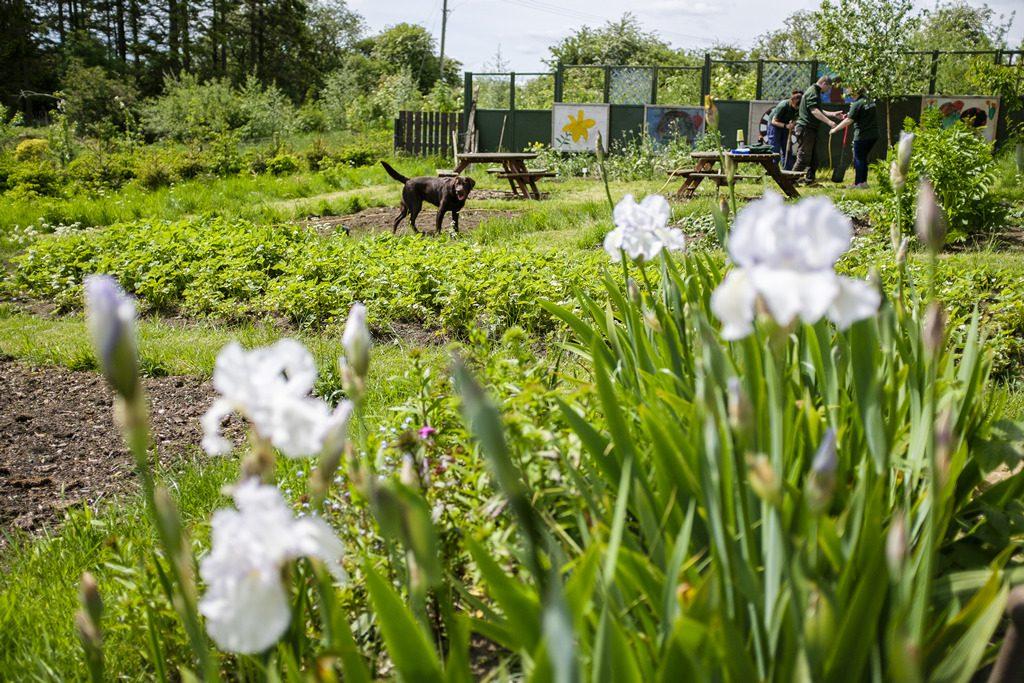 [ 23 de mayo de 2017 ] FOTOS: Hacer un spot de jardinería con la organización de caridad local, Sólo las Características del Trabajo - Richmondshire Hoy 21