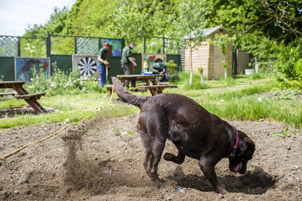 [ 23 de mayo de 2017 ] FOTOS: Hacer un spot de jardinería con la organización de caridad local, Sólo las Características del Trabajo - Richmondshire Hoy 22